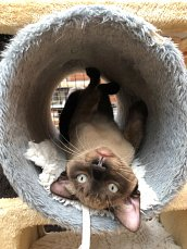 Archie in the scratching post tunnel