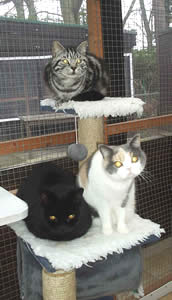 Bruno, Bessie and Frodo at Pinewood Cattery ~ Woking, Surrey.